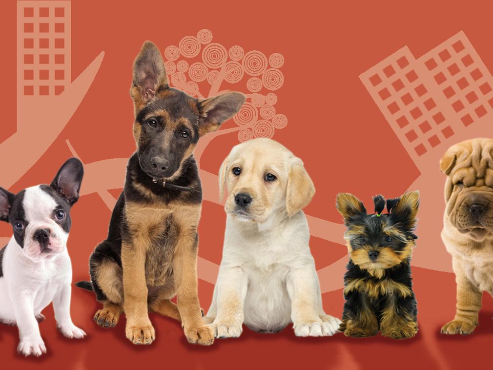 Curso para dueños de cachorros