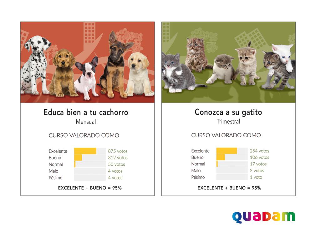 Cursos de cachorros y gatitos de Quadam
