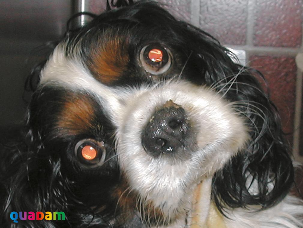 Nueva edición del curso Desórdenes Vestibulares en el perro y el gato